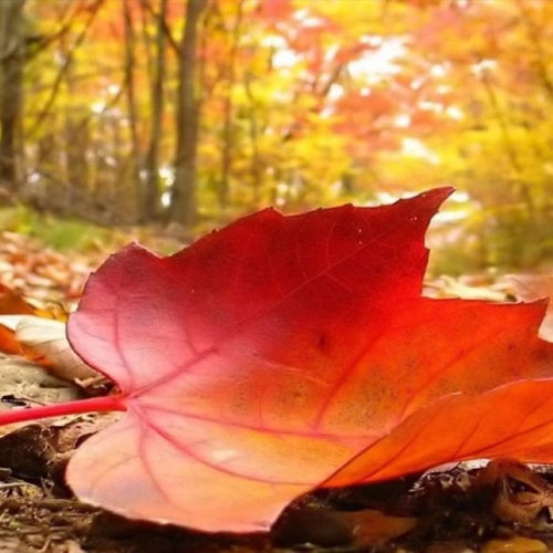 arrivederci-estate-con-l-equinozio-d-autunno-comi-245446
